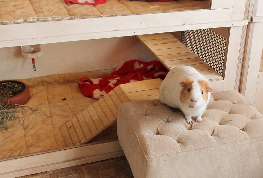 Из чего можно сделать домик для морской свинки своими руками 46