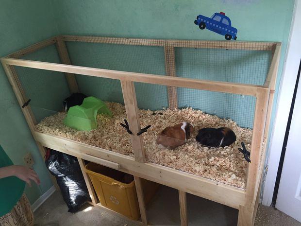Как сделать домик для морской свинки руками 69